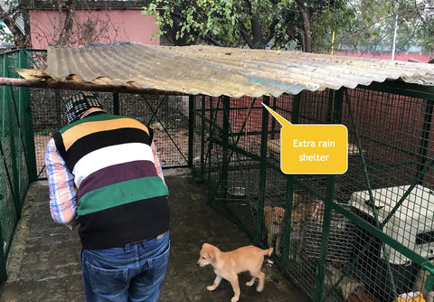 stray dogs of india shelter