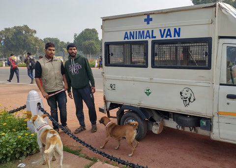 New Delhi Animal Rescue