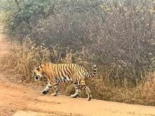 Load image into Gallery viewer, ranthambore national park