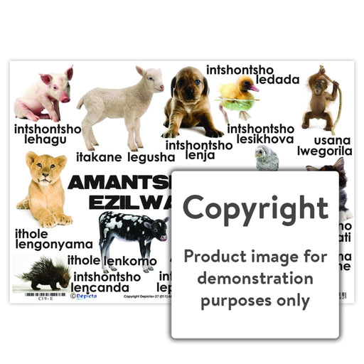 Amantshontsho Ezilwantana ( Baby Animals ) Wall Charts And Posters