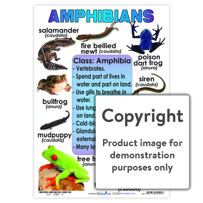 Amphibians Wall Charts And Posters