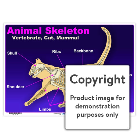 Animal Skeleton: Vertebrate Cat Mammal Wall Charts And Posters