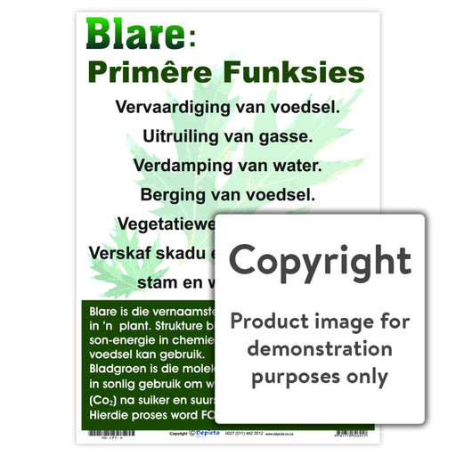 Blare: Primêre Funksies Wall Charts And Posters