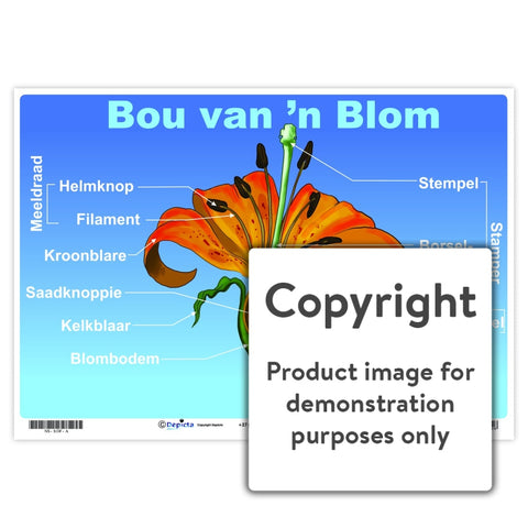 Bou Van N Blom Wall Charts And Posters