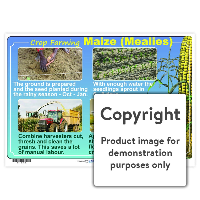 Crop Farming:  Maize (Mealies) Wall Charts And Posters