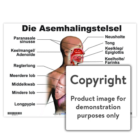 Die Asemhalingstelsel Wall Charts And Posters