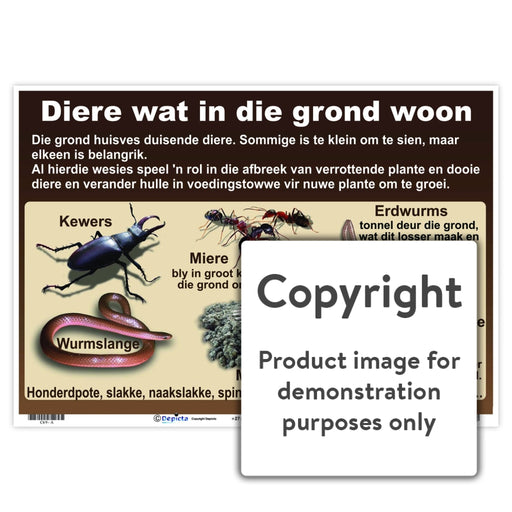Diere Wat In Die Grond Woon Wall Charts And Posters