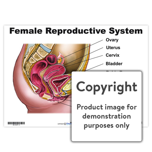 Female Reproductive System Wall Charts And Posters