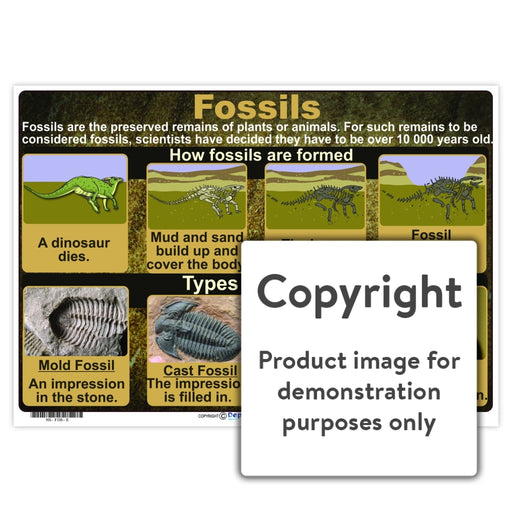 Fossils Wall Charts And Posters