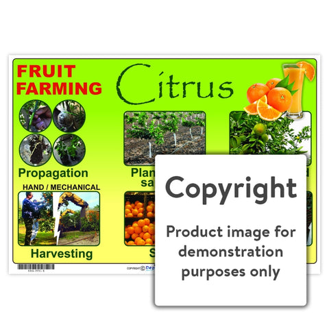 Fruit Farming: Citrus Wall Charts And Posters