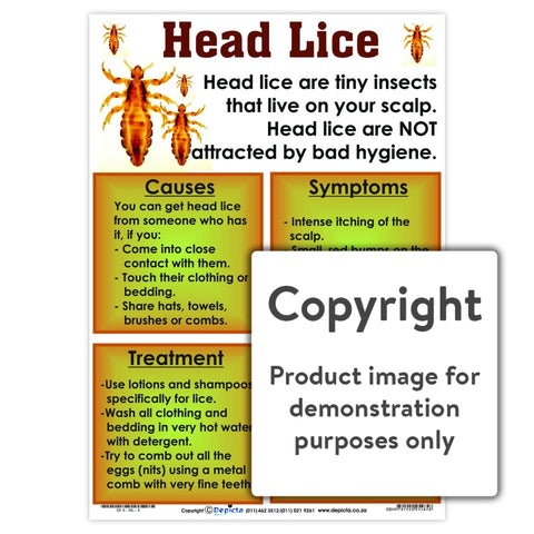 Head Lice Wall Charts And Posters