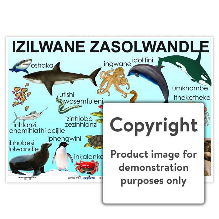 Izilwane Zasolwandle ( Sea Creatures ) Wall Charts And Posters