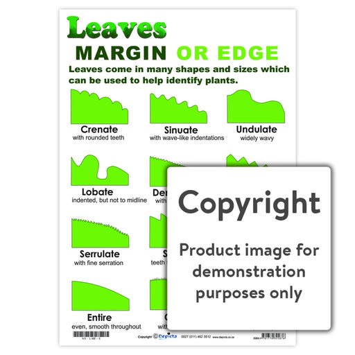 Leaves: Margin Or Edge Wall Charts And Posters