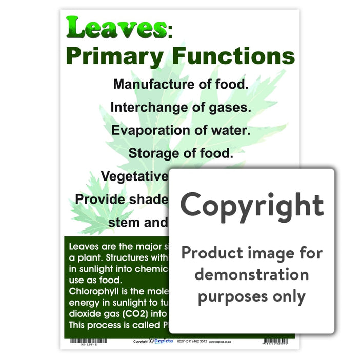 Leaves: Primary Functions Wall Charts And Posters