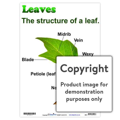 Leaves: Structure Of A Leaf Wall Charts And Posters