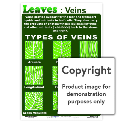 Leaves: Veins Wall Charts And Posters