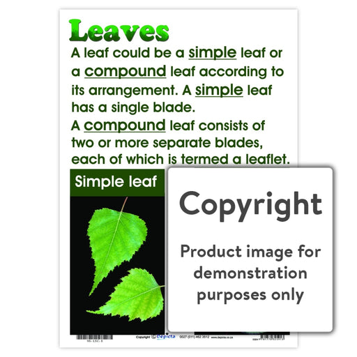Leaves Wall Charts And Posters