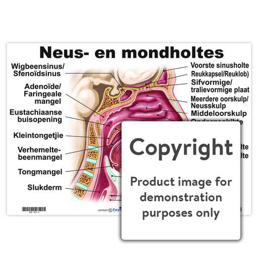 Neus- En Mondholtes Wall Charts And Posters