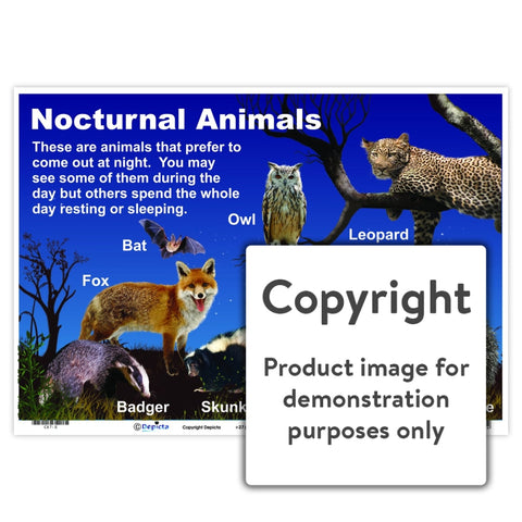 Nocturnal Animals Wall Charts And Posters