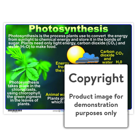 Photosynthesis Wall Charts And Posters