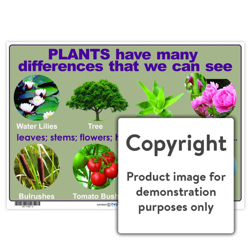 Plants Have Many Differences That We Can See Wall Charts And Posters