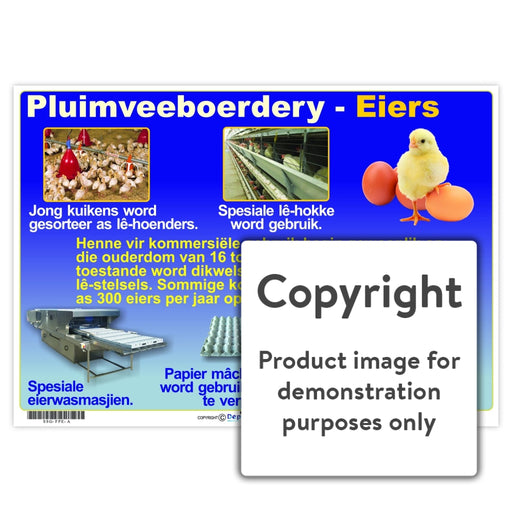 Pluimveeboerdery - Eiers Wall Charts And Posters