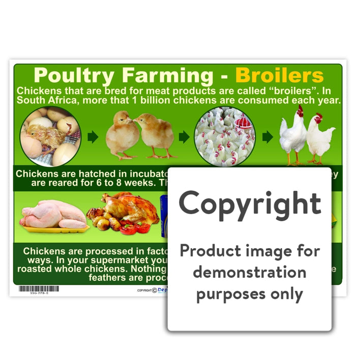 Poultry Farming - Broilers Wall Charts And Posters