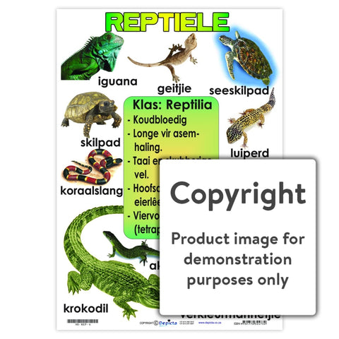 Reptiele Wall Charts And Posters