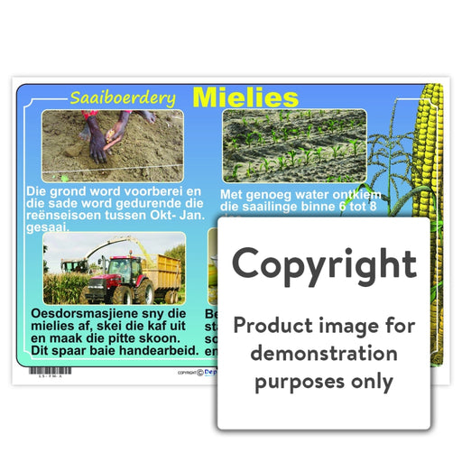 Saaiboerdery - Mielies Wall Charts And Posters