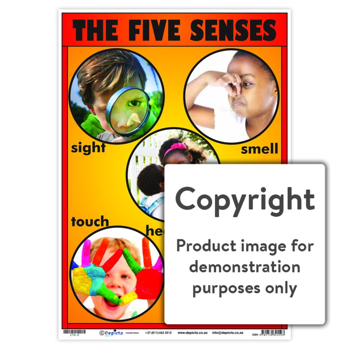 The Five Senses Wall Charts And Posters