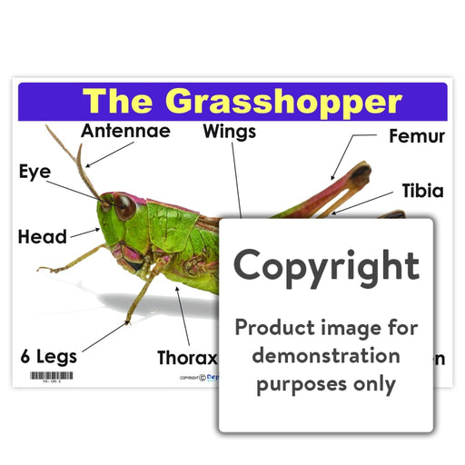 The Grasshopper Wall Charts And Posters
