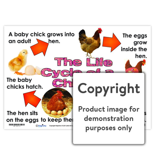 The Life Cycle Of A Chicken Wall Charts And Posters