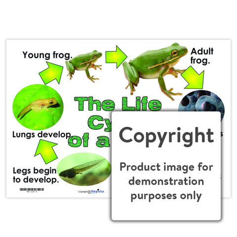 The Life Cycle Of A Frog Wall Charts And Posters
