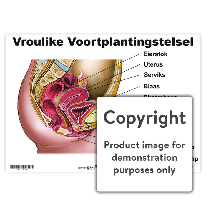Vroulike Voortplantingstelsel Wall Charts And Posters