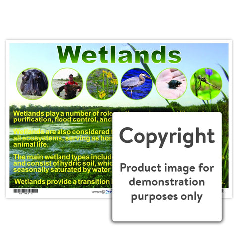 Wetlands Wall Charts And Posters