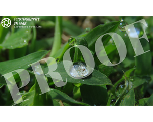 Grass Droplets Print