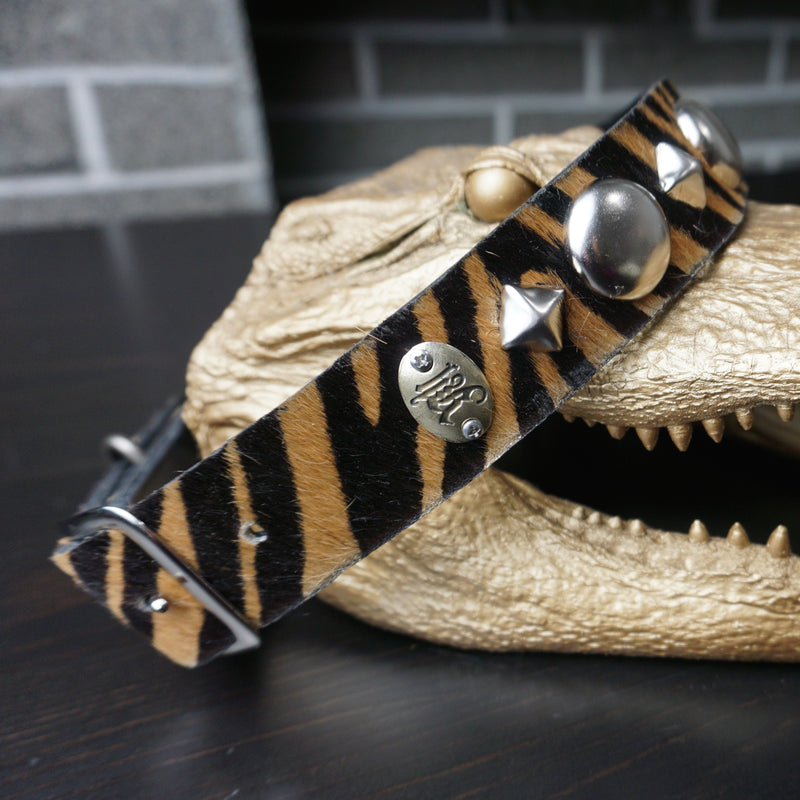 custom zebra print studded dog collar on alligator close up