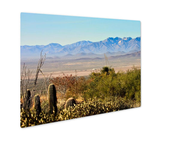 Metal Panel Print, Tucson Arizonsonordesert Museum Vista - Metal Panel Print - Payabee Home Goods