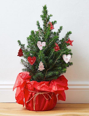 Mini pot grown Christmas tree (Nordic, wooden style decs)