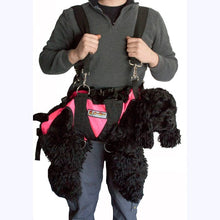 Load image into Gallery viewer, Dog Lift Harness - K9 Rescue Gear - Rock N Rescue