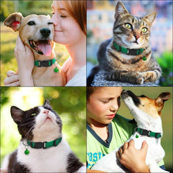 Anti Pest And Lice Pet Collars