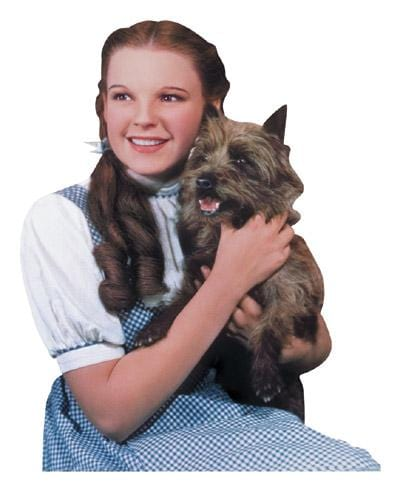Wizard of Oz™- Dorothy and Toto Magnet