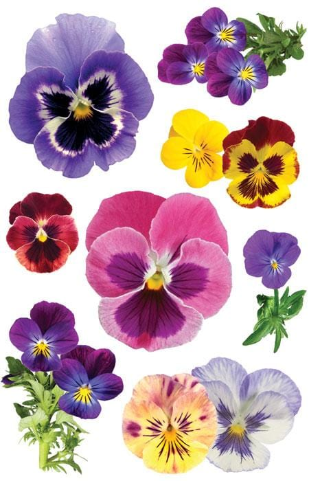 Pansies 3D Sticker