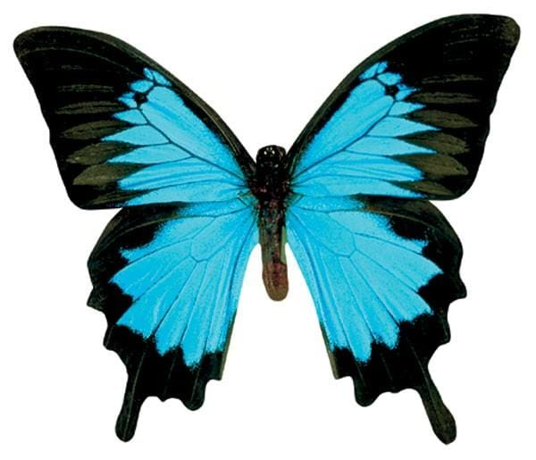 Mountain Blue Butterfly Magnet