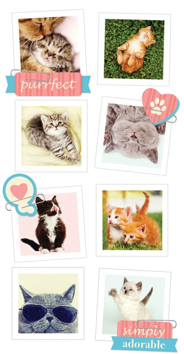 Cats Snapshot Sticker