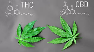 What is the difference between CBD & THC?