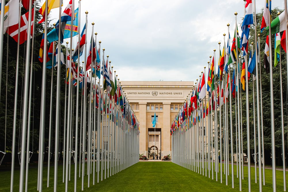 United Nations Approve the World Health Organisation's Recommendation to Reschedule Cannabis