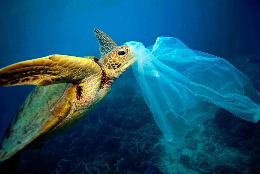 Plastic Free July - turtle with plastic bag in ocean