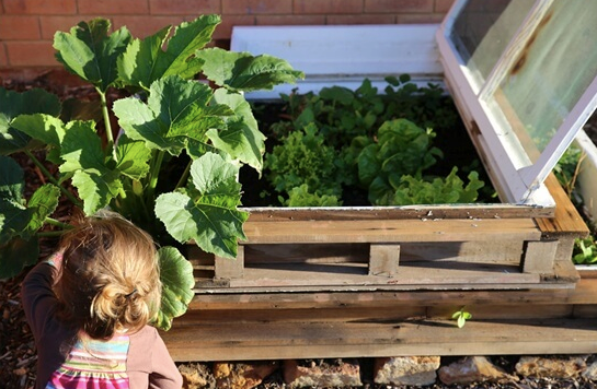 Old window frames can be used as raised garden beds.