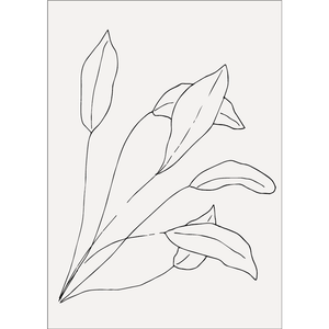 'Leaves' - Print - By James Wilson